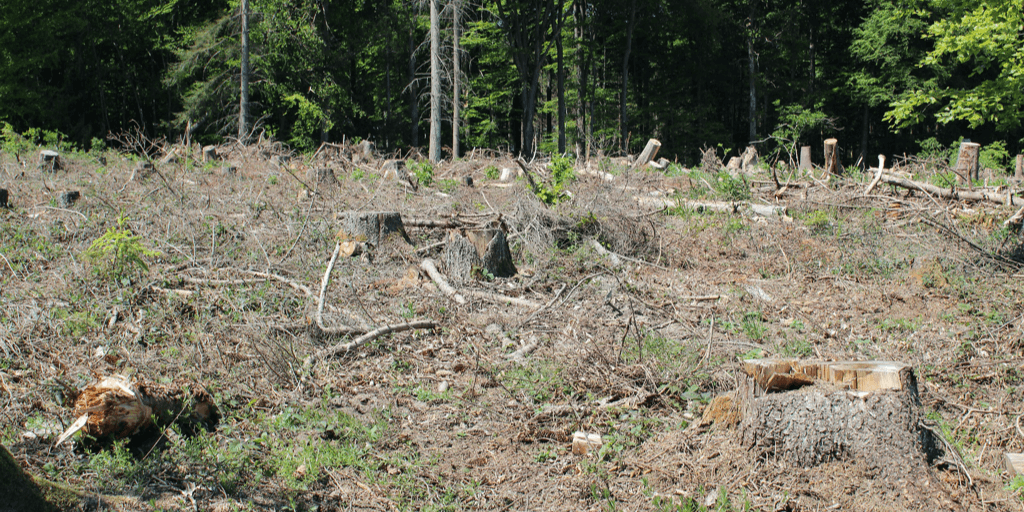 a messy field of stumps and sticks.